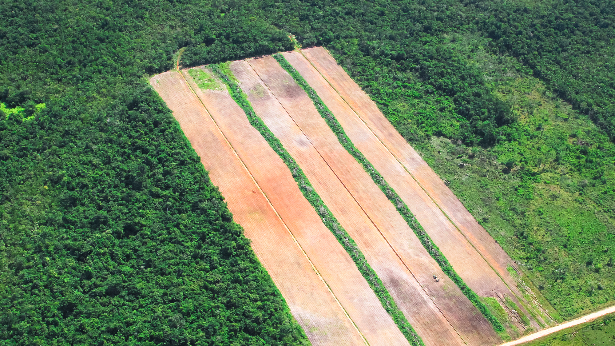 Slash and burn clear felling in Belize Rainforest illustrates our lack of care for ecosystems.